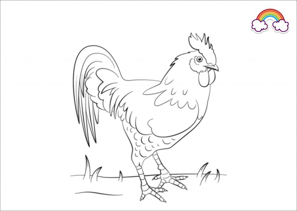 mewarnai gambar ayam jago indonesia