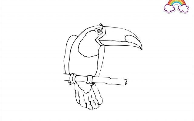 Mewarnai Gambar Burung Rangkok Besar